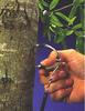 MP800植物茎流监测系统