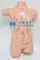 外科缝合包扎展示模型17处切口