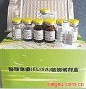 白介素-6受体(IL-6R/sCD126/gp80)ELISA试剂盒