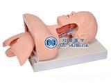 高级气管插管训练模型,气管插管模拟人