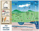 EcoTron氮沉降观测系统
