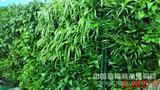 植物背景墙(新品上市)/植物空气净化系统