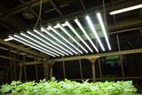 杆式智能LED光源