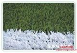 供应足球场专用草