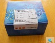 大鼠巨噬细胞炎性蛋白2(MIP-2)ELISA 试剂盒
