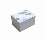 人麻疹病毒(MV)ELISA试剂盒