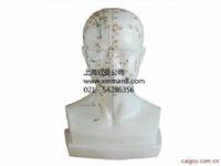 头针灸穴位模型,头针模型