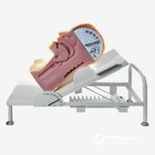 H88高級吞咽機制模型,呼吸機制展示培訓模型