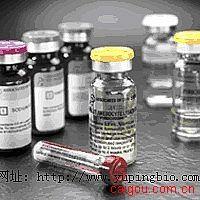 人抗β2肾上腺素能受体自身抗体(β2-AR)ELISA试剂盒