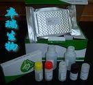 人组蛋白H2b(histon-H2b)Elisa试剂盒