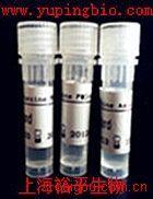 Hh信号转导途径膜蛋白受体抗体