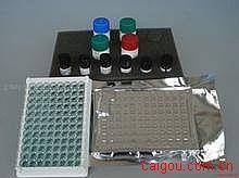 人孤腓肽(OFQ/N)ELISA试剂盒