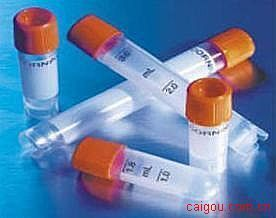 8-羟基鸟嘌呤DNA糖基化酶(OGG)抗体