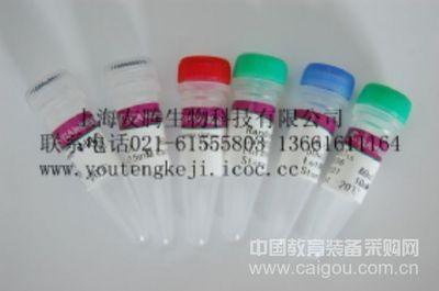 人葡萄糖激酶(GCK)ELISA Kit