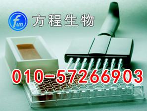 人肾损伤分子1(Kim-1)ELISA试剂盒,北京现货