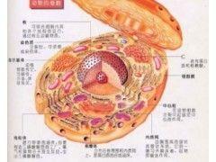 SP2/0(骨髓瘤)