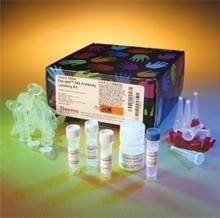 人CK-MB试剂盒,CK-MB ELISA KIT,人肌酸激酶同工酶MB试剂盒