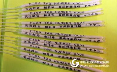 鱼类放流标记体外挂牌T型标记