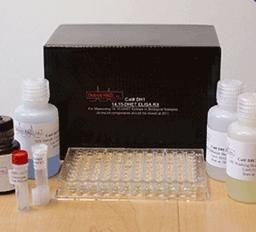 大鼠正常T细胞表达和分泌因子(RANTES/CCL5)ELISA kit