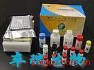 质粒提取试剂盒