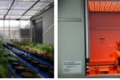 PlantScreen植物表型成像分析系統應用 ——衰老與防御途徑對雜種優勢的貢獻
