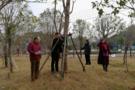 湖北崇阳:审计关注校园绿化工程建设