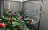 科晟品牌  低温培养箱  DRX-460-LED  节能环保