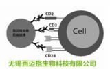 分选细胞抗体磁珠