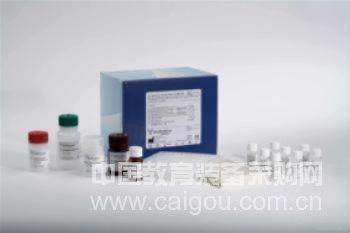 兔主要组织相容性复合体Ⅱ类(MHCⅡ)ELISA Kit