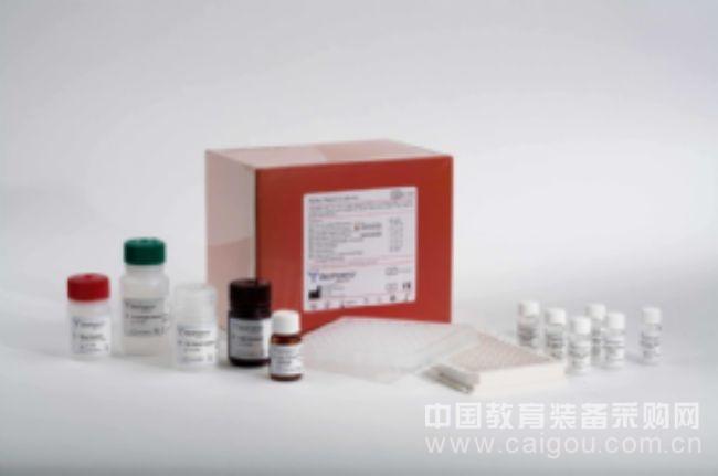 检测NGB含量酶免试剂盒,小鼠脑红蛋白ELISA Kit