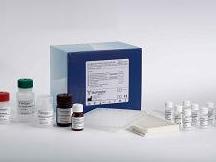 人一氧化氮合成酶(NOS)ELISA试剂盒