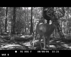 HS200野外动物侦察照相机