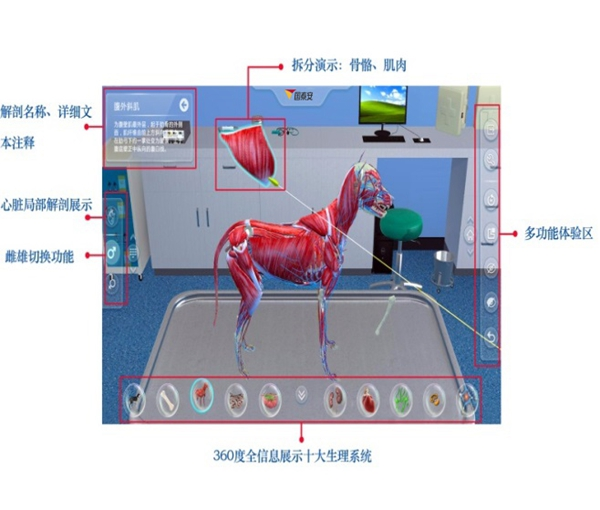 国泰安犬VR虚拟解剖实训系统(动物解剖VR实训系统学习软件)